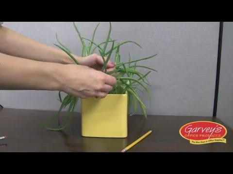 How To Keep Bugs Out Of Office Plants