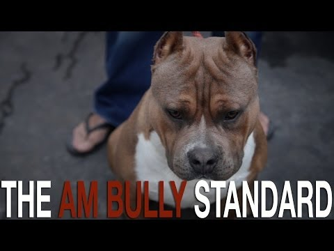 THE AMERICAN BULLY BREED STANDARD