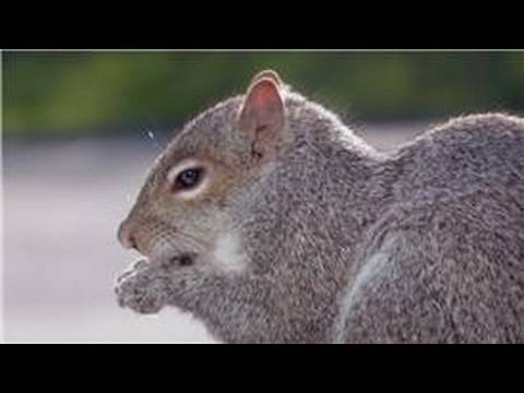 Animal Care & Information : What Do Squirrels Eat?