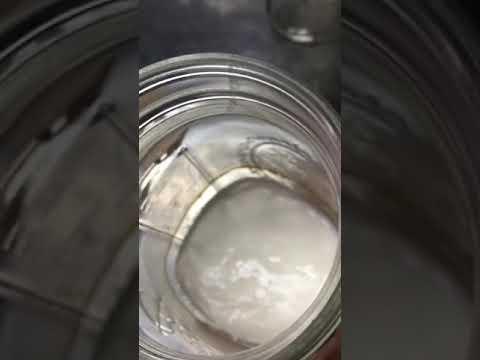 Water kefir grains culturing in milk! 😳