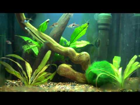 Beautiful Fish Tank! (Update Dec 2, 2012)