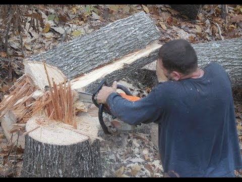 How to Cut Huge Trees by Professionals. Tree Services, Tree Removal Services.  Cutting Trees.