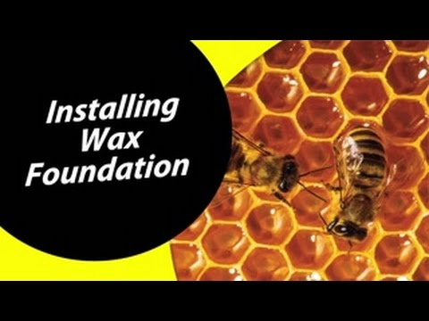 How To Install A Wax Foundation For Your Beehive For Dummies