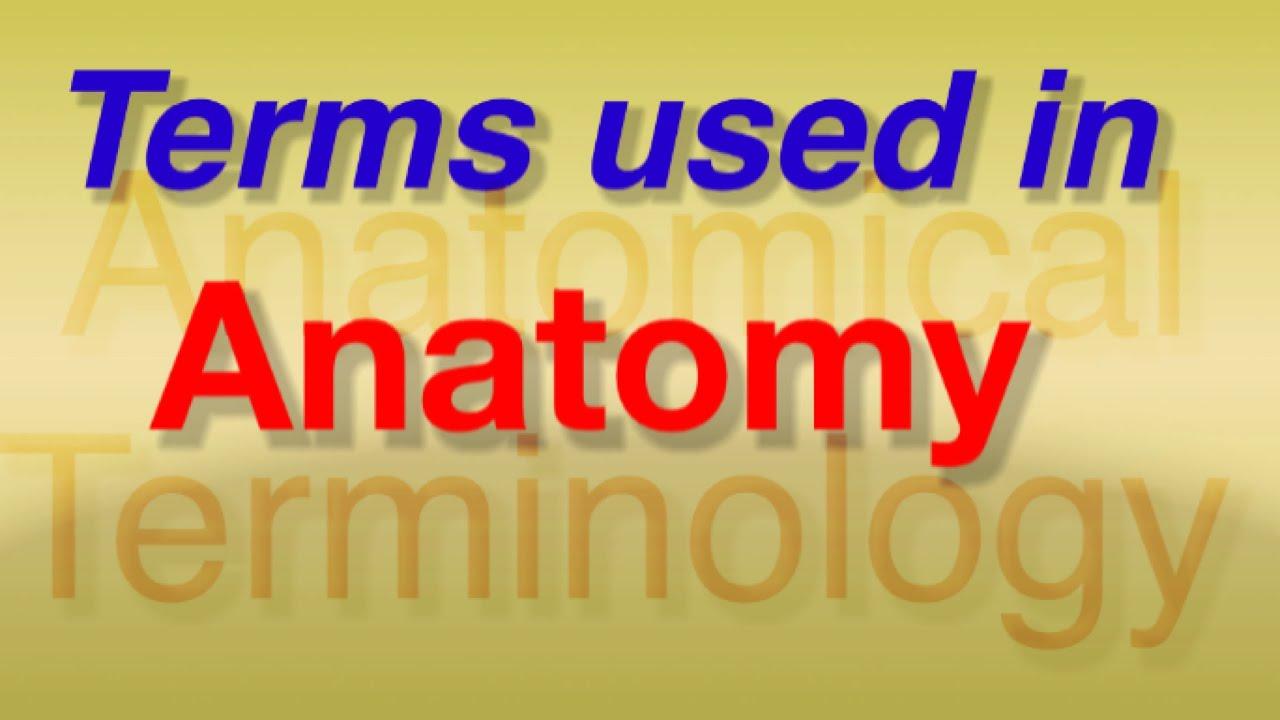 Anatomical terminology (Hindi/English)