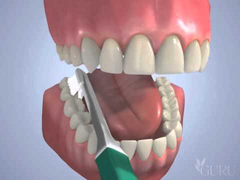 Bottom Teeth Brushing