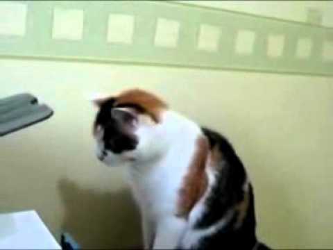 The IT Cat on Vimeo