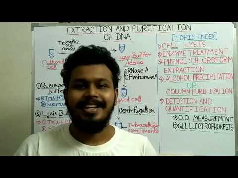 DNA extraction and purification from bacteria   | DNA quantity, purity and quality measurement |