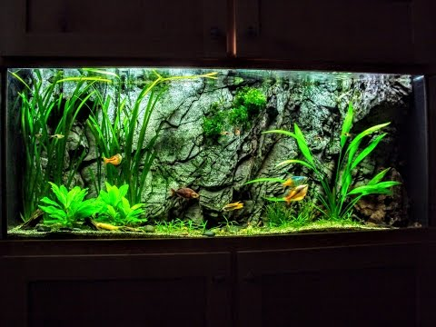 The Hard Water Planted Aquarium & Everything You Want To Know!