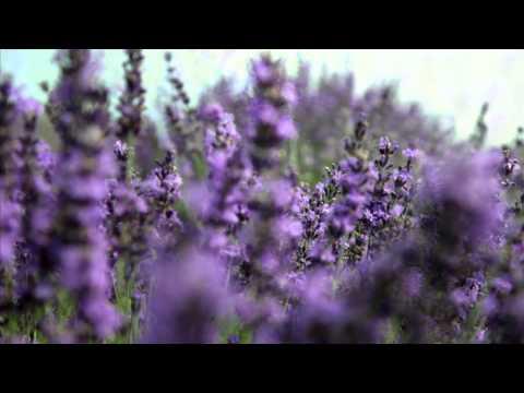 Farfalla -- organic cosmetics and essential oils. Made in Switzerland.