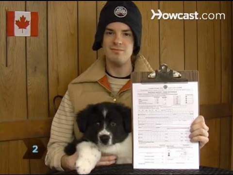 How to Register a Dog with the CKC