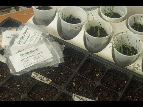What Seeds Can I Start Indoors? - First Garden New Gardener