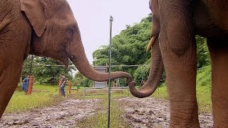 Elephants Learn To Work Together | Super Smart Animals | BBC Earth