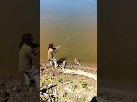,missouri river bluegill fishing kansas  city channel catfish
