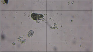 Life in a Drop of Water (livestream 16/12)