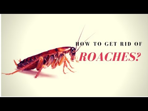 How to Kill Roaches Fast? ⛔ How to Get Rid of Roaches Naturally?