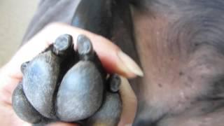 20151021 Detailed Dog Nail Trimming Darkblack Nails
