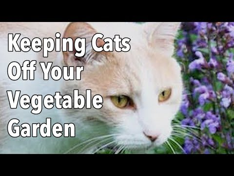 Keeping Cats Off Your Vegetable Garden