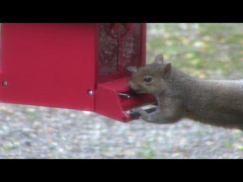Squirrel Proof Bird Feeder - DON'T WASTE YOUR MONEY