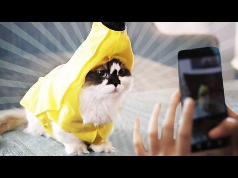 Making A Living As An Instagram Cat
