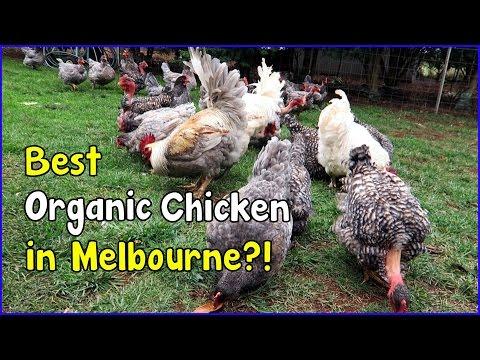 Free Range egg farming and Organic in Australia (May 3, 2016 vlog)