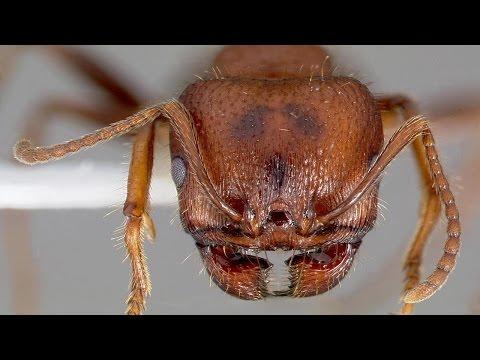 #2 Ants Under microscope
