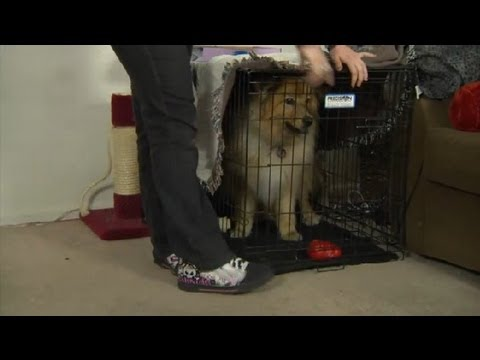 How to Curb a Dog's Aggression Toward a Front Door : How to Domesticate Your Dog