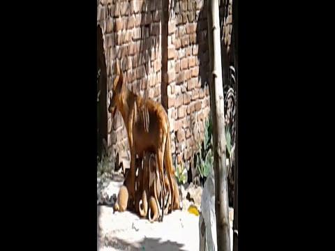dog feeding new born saven puppy