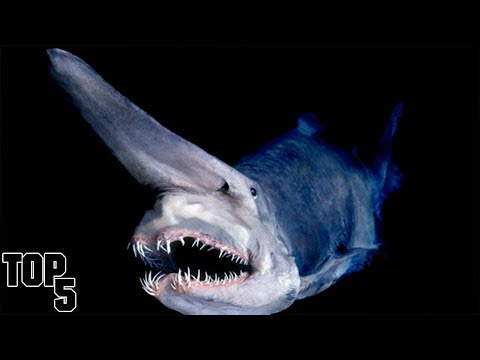 Top 5 Scary Things Found In the Ocean That Will Haunt You