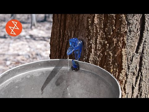 Making Maple Syrup | Où se trouve: Garland Sugar Shack