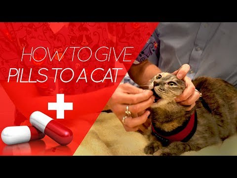 How To Give a Pill to a Cat... or Dog