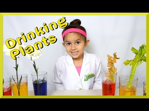 Color changing flowers and celery experiment Grace's Science Place