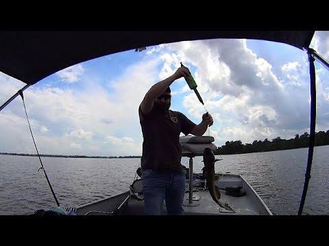 chasing catfish on Reelfoot Lake