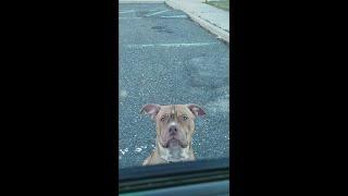 Scared Straight Pup Style  || ViralHog
