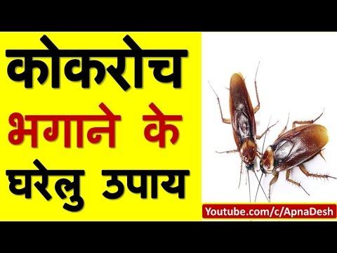 कोकरोच भगाने के घरेलू उपाय | Home Remedies To Get Rid Of Cockroaches from kitchen, home, bathroom