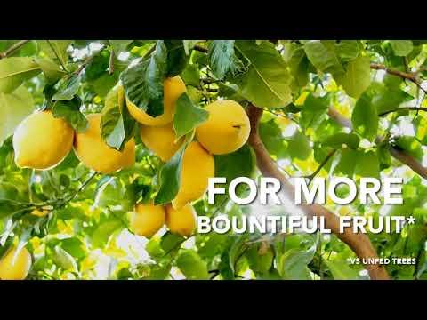How to Use Miracle-Gro® Citrus, Avocado, & Mango Food
