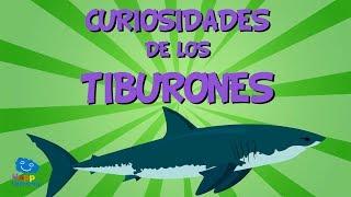 Curiosidades de los Tiburones | Videos Educativos para Niños.