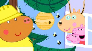 Kids Videos | Peppa Pig New Episode #748 | New Peppa Pig