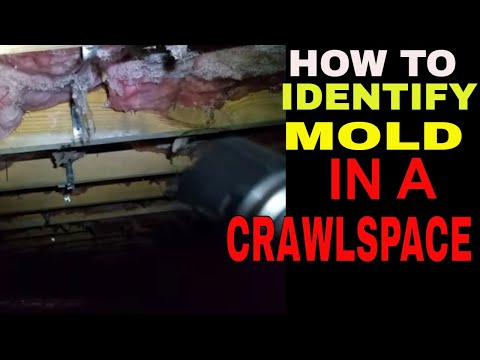 How to identify  mold in crawlspace PART 1