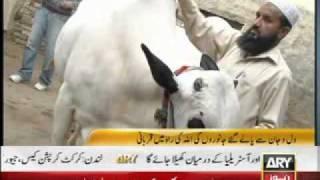 (ARY news) Eid ulzah Packege