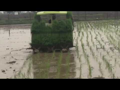 Rice water planting machine चावल का पौधा लगाने की मशीन chaval ka pauda lagane ki machine