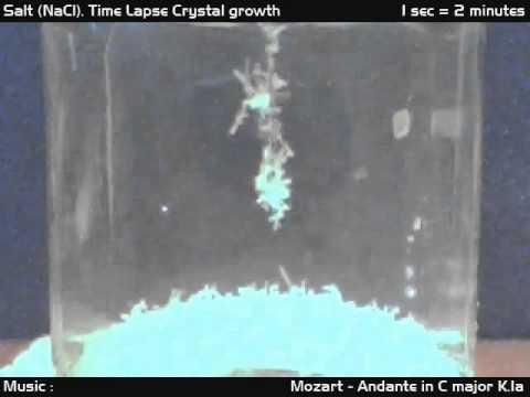 Salt Crystal Time Lapse