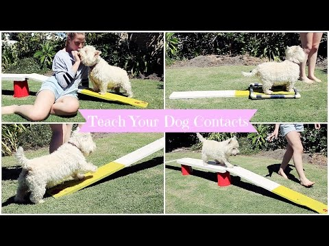 How To: Teach Your Dog Agility Contacts | TheDogBlog