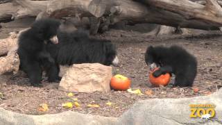 Pumpkin Treats to Brookfield Zoo Animals