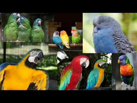 How To Build An Outdoor Aviary