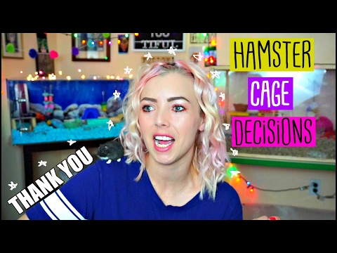 HAMSTER CAGE DECISIONS!   Critter Nation, Bin Cage, Exo Terra?!