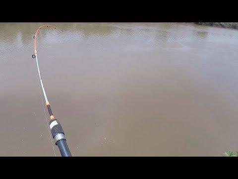 Unduh 510+ Gambar Mancing Ikan Betutu Terpopuler