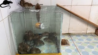 Mouse Trap With Water Cans And Wire Mesh / Best Way To Make Homemade Mousetrap