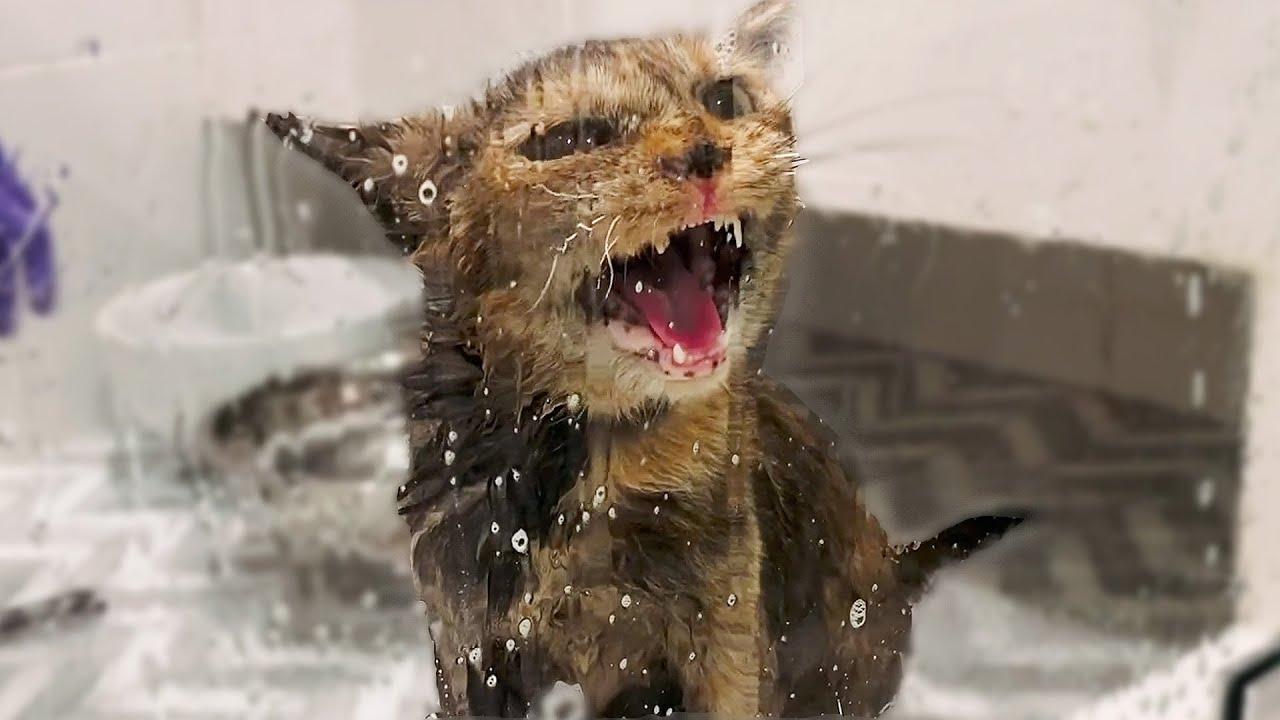 Giving My Stray Pregnant Cat a Flea Bath