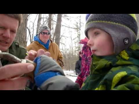 News 8 Eye Piece: Maple Syrup Time!