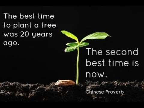 The Best Time To Plant A Tree was 20 Years Ago - Monday Motivation Ep118